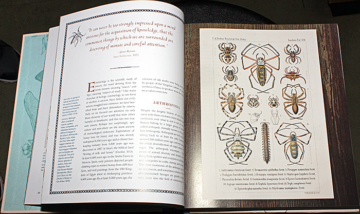 Innumerable Insects by Michael S. Engel