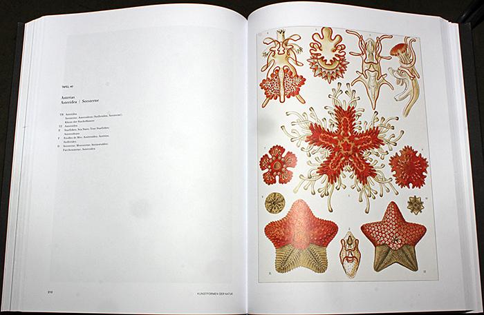 Ernst Haeckel: Kunst Formen der Natur – Kunst Formen aus dem Meer