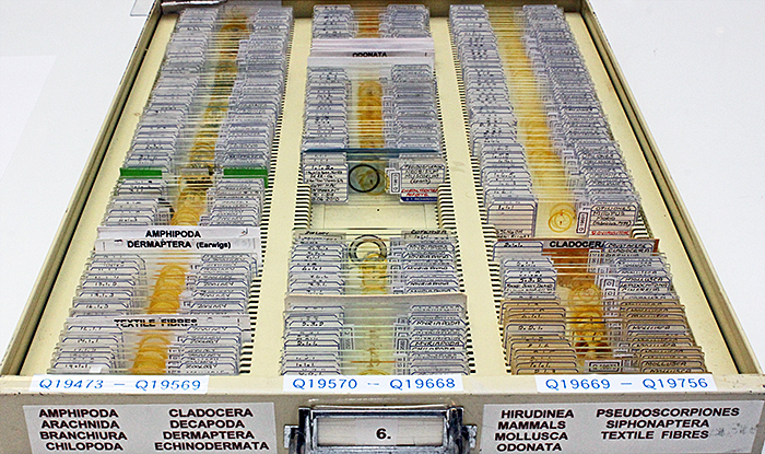 Drawer of slides from the Doug Richardson collection