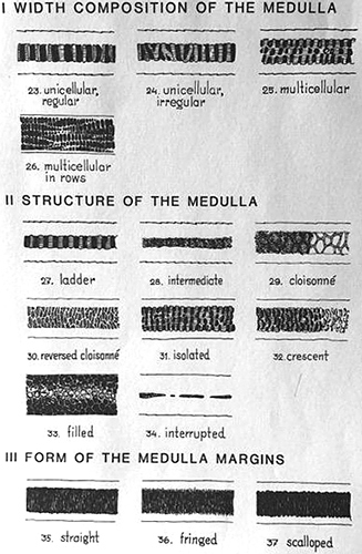 Types of medulla in hairs