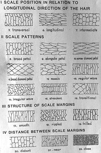 Scale patterns on hairs