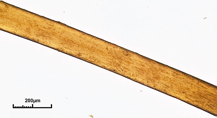 Coarse mammoth hair (10× objective)
