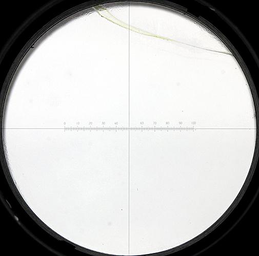 Reticle in Olympus Micro WHK eyepiece