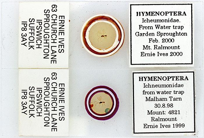 Slides of ichneumonids by Ernie Ives