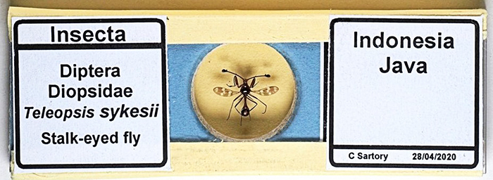 Slide in protective slip-case