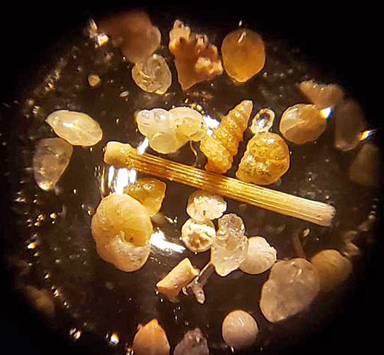 Forams through George Adams Improved Single Microscope