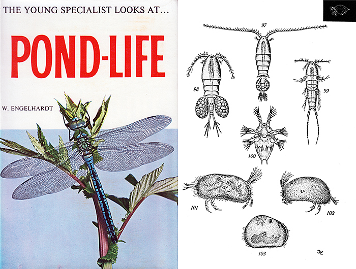 The Young Specialist Looks At Pond-Life by Wolfgang Engelhardt & Hermann Merxmüller