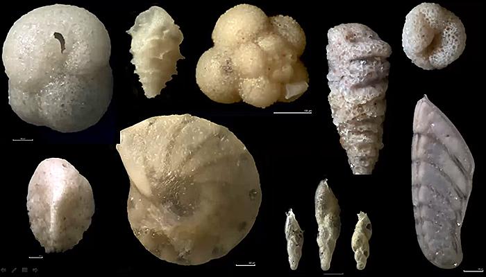 Various forams