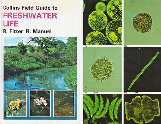 Collins Field Guide to Freshwater Life by R. Fitter & R. Manuel