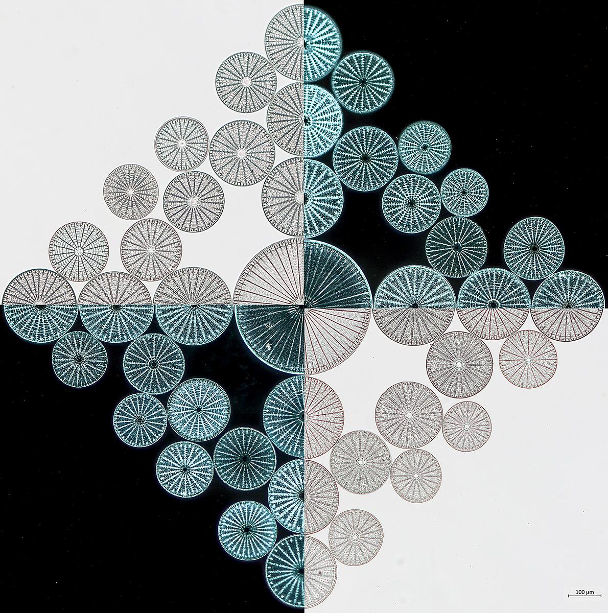 Diatoms two ways